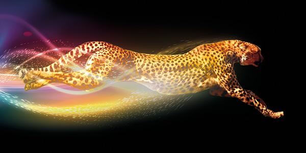 Leopard running fast